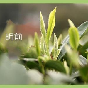 2020年清明前正宗福鼎高山荒野牡丹白茶 兰花香