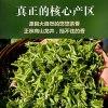 龙井绿茶2020新茶正宗特级龙井豆香型耐泡散装茶叶500g包邮