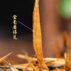 2020云南古树滇红大金针特级蜜香型凤庆金芽茶叶浓香型滇红250g包邮